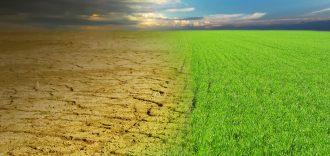 Dry desert and green fresh grass